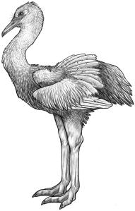 Wingwalker
